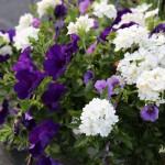 blue and purple sun basket